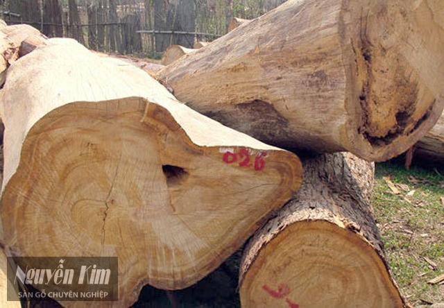 gỗ pơ mu giá bao nhiêu tiền 1 khối?