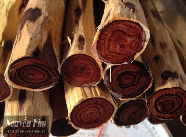 gỗ trắc có tốt không