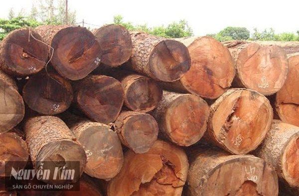 gỗ cate là gỗ gì
